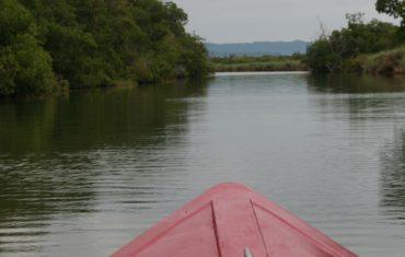 Black River Safari